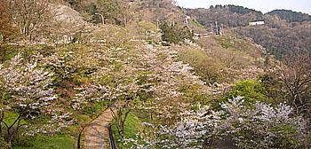 yakiyama.jpg